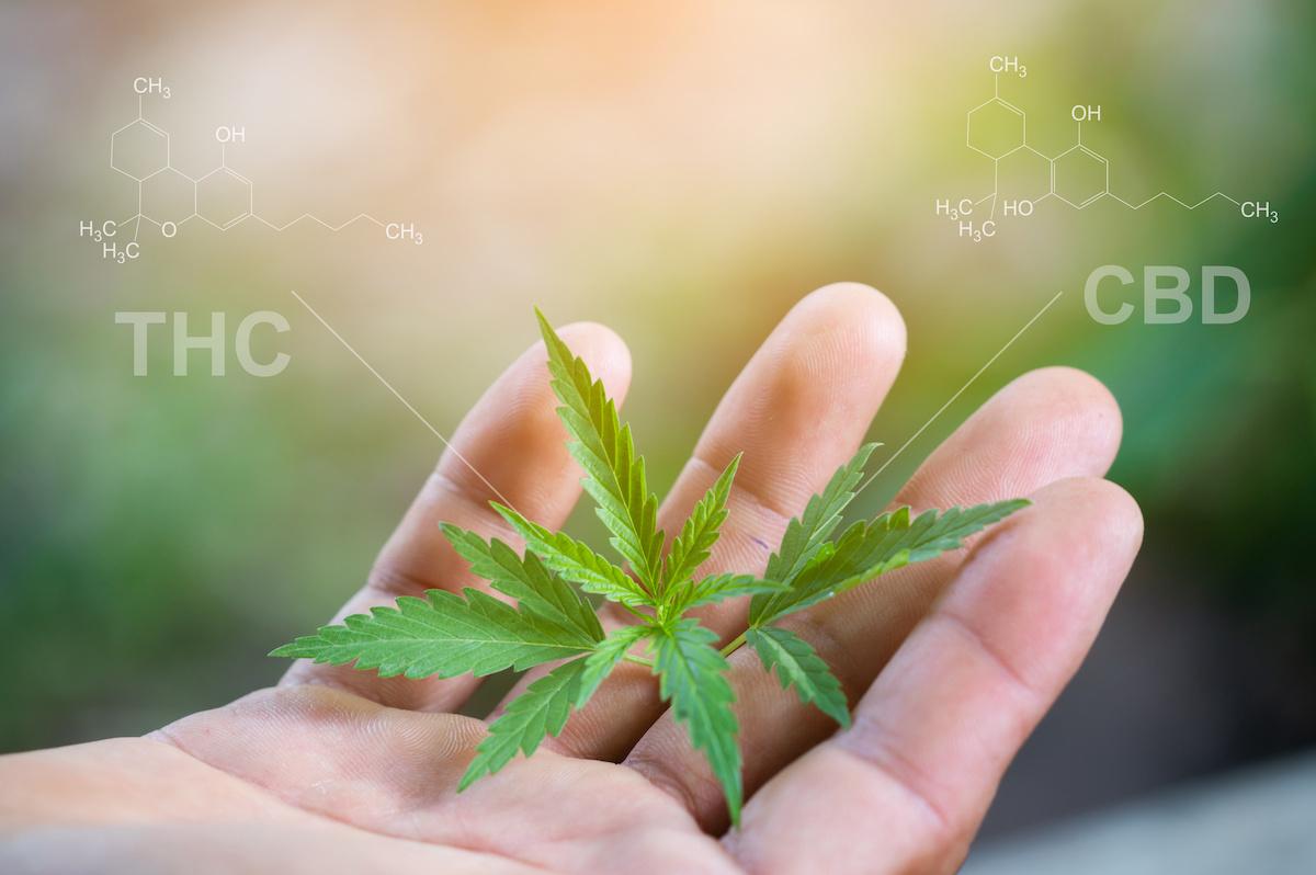 Quelles sont les vertues de la Fleur de cannabidiol ?